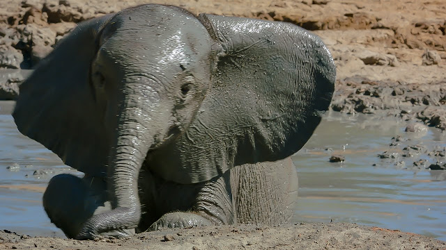 Here it is the secret of elephants rarely infected with cancer. Can it be applied to humans?