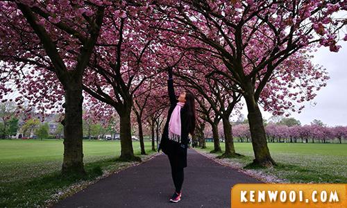 ediburgh cherry blossom