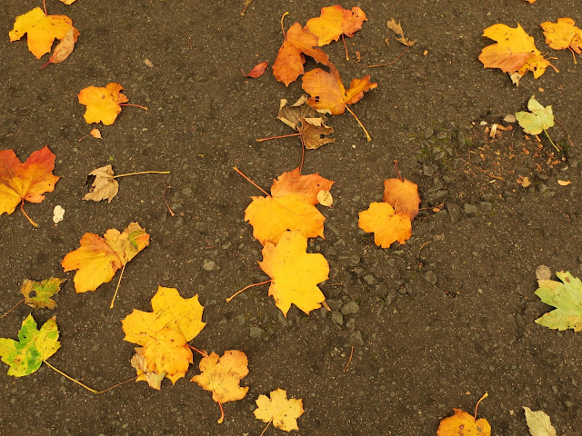 Fallen autumn leaves given extra gold on the day the sun turned red.
