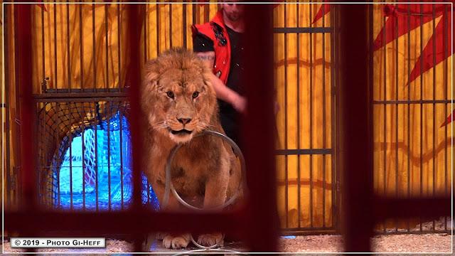 cirque seneca ;- Teddy Seneca et ses Animaux : lions, lionnes -
