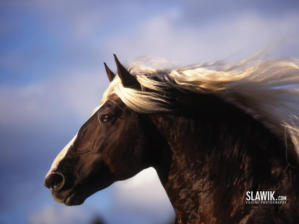 Most Inspiring   Wallpaper Horse Dark Brown - slawik-horse-wallpapers-horses-6070990-1024-768  2018_337568.jpg