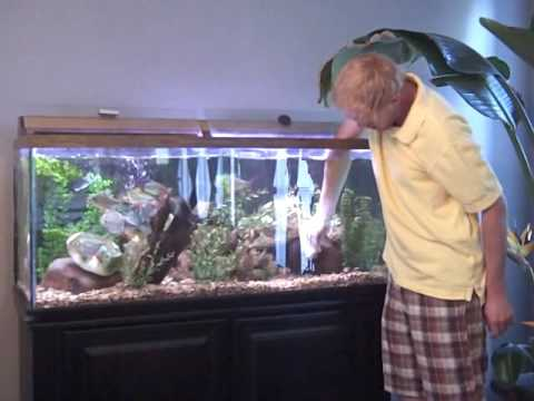 Ornamental Fish Aquarium Aquarium Care Tips 3 Important Types Of