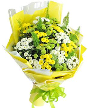 bo hoa cuc