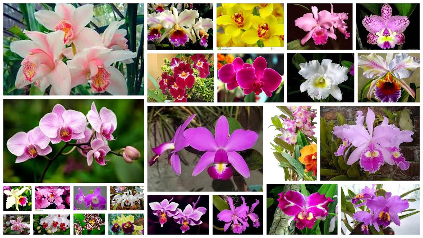 Tus Efemérides Escolares: 23 de Mayo Declaración de la Orquídea como ...