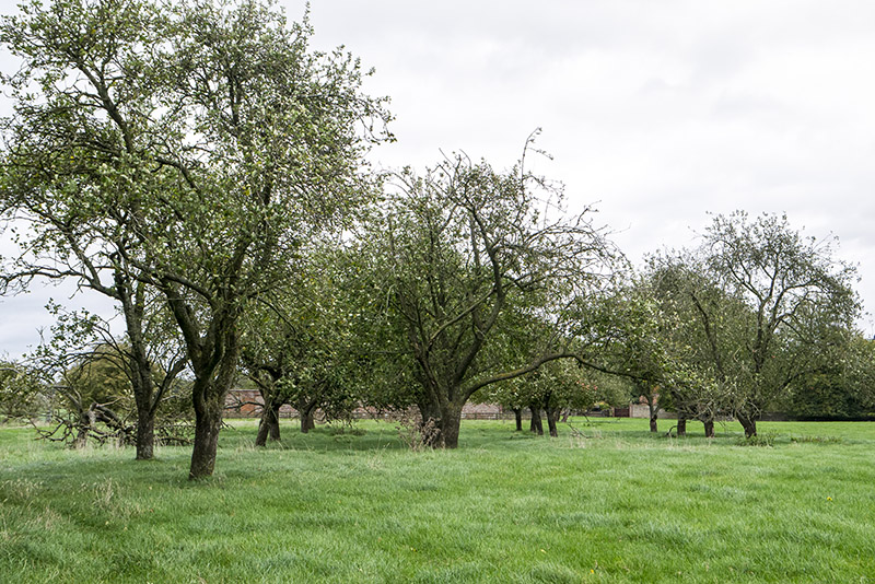 Orchard near Calverton