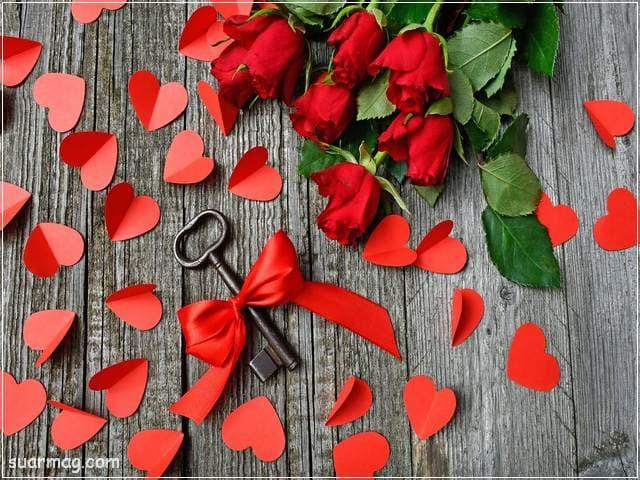 ورد احمر طبيعي 7 | Natural red roses 7