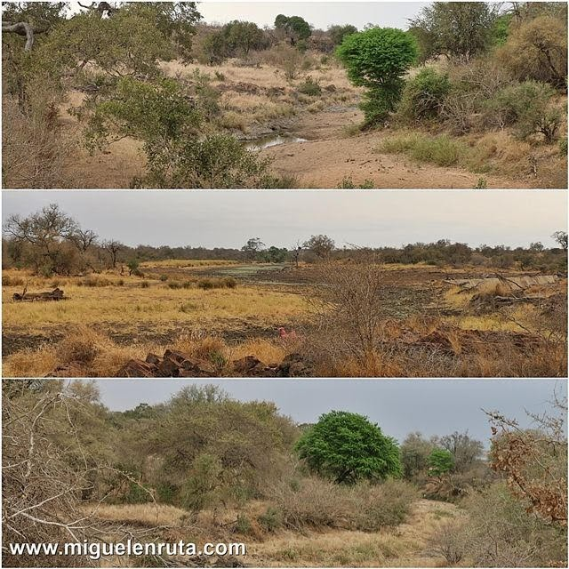 Paisajes-Satara-Kruger