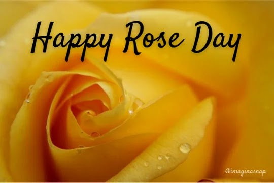rose day images 2021