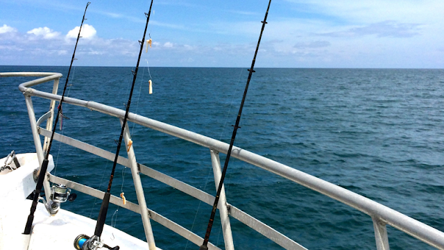 looking out over the water with fishing rods standing against the side railing of a boat