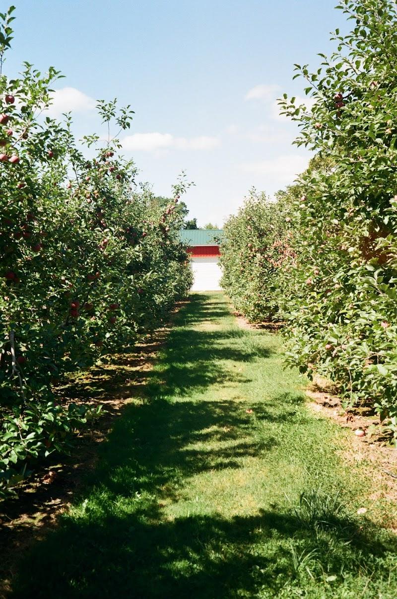 Light Leak on the Apple Farm