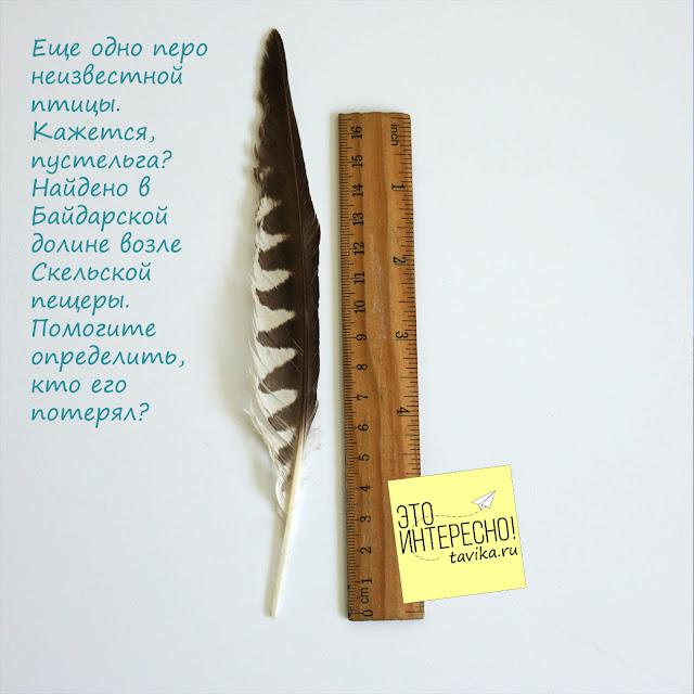 перо птицы, Крым