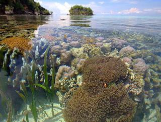 Ekologi Laut Tropis
