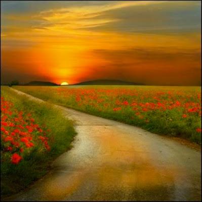 Longo caminho entre as flores com um sol se escondendo nos montes, deixando o céu avermelhado e brilhante.
