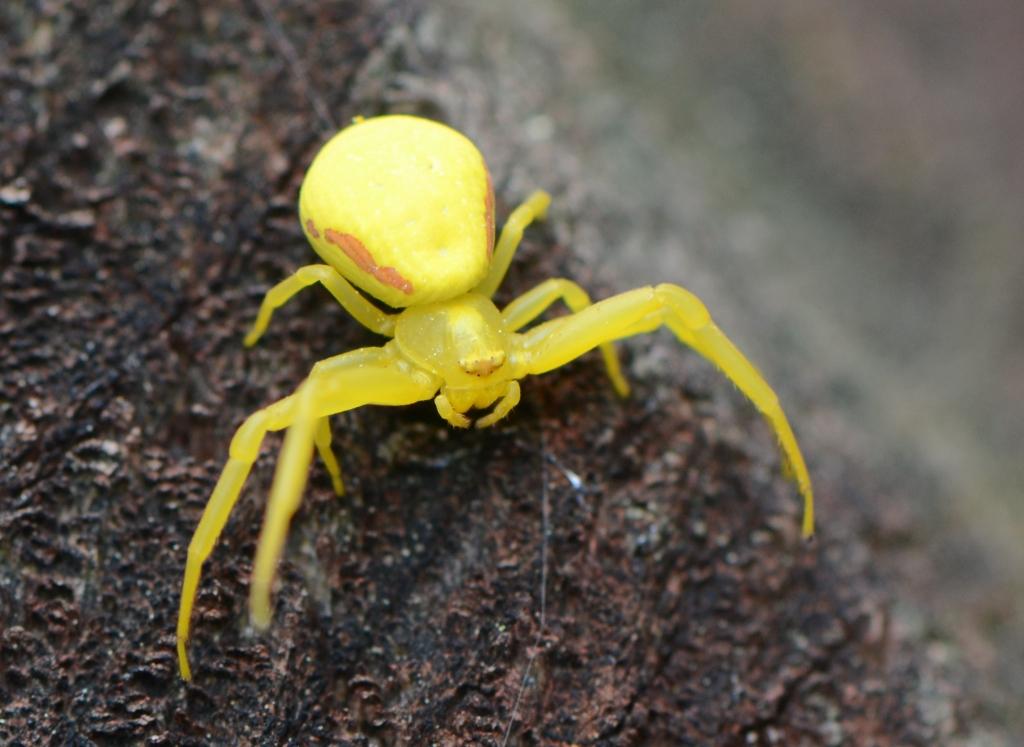 Ohio Birds and Biodiversity: Ballooning spiders