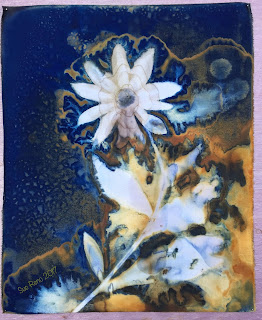 Wet Cyanotype_Sue Reno_Image 63