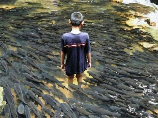 rio de peixes