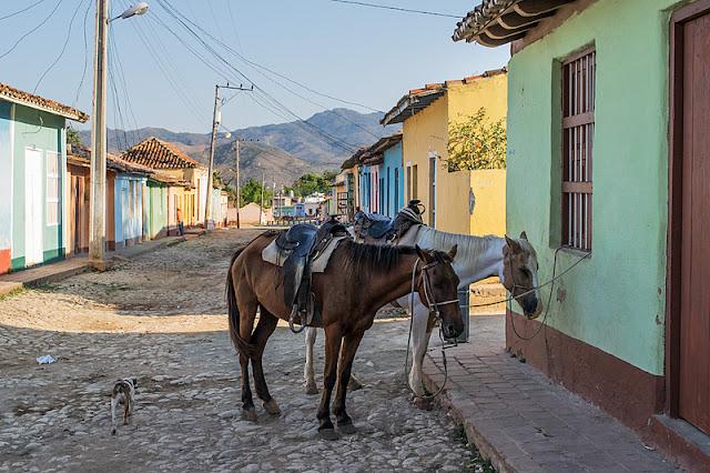 Deux chevaux attachés dans une rue de Trinidad (Cuba)
