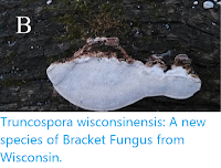 http://sciencythoughts.blogspot.co.uk/2016/05/truncospora-wisconsinensis-new-species.html