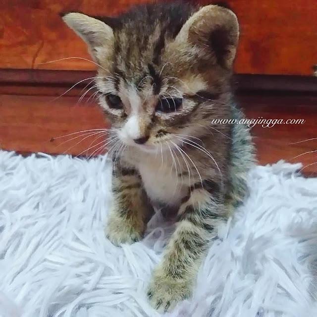 makanan yang tidak boleh di berikan kepada kucing