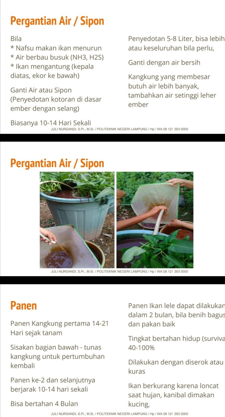 Budidaya Ikan Lele Dan Kangkung Dalam Ember - Cirumanja.com