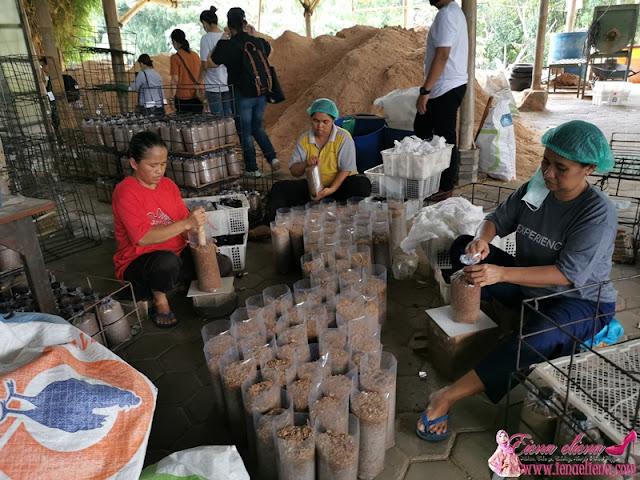 Rumah Kebun Jamur - Kebun Jamur Terbesar di Yogyakarta