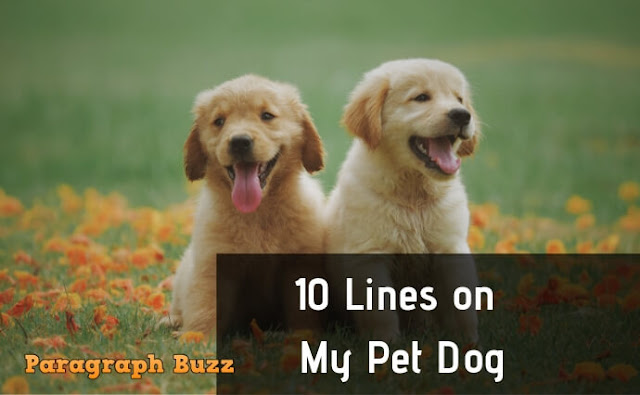 10 Lines on My Pet Dog