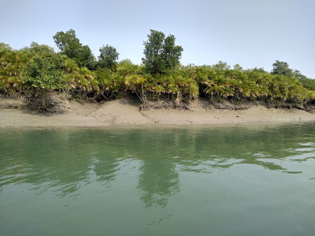 World heritage site, mangroves