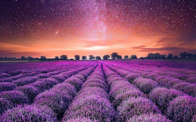 14 Nature Field, Sunset, Grass, Sky, Clouds Wallpapers HD 8K for Desktop