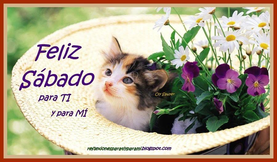 Feliz Sábado gatito