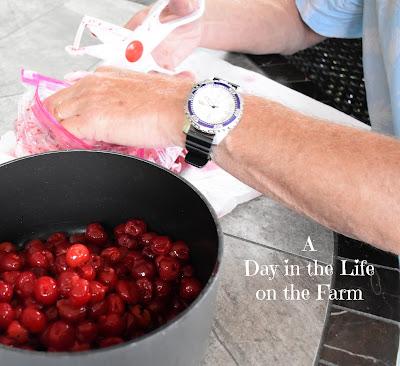 Tart Cherries being pitted