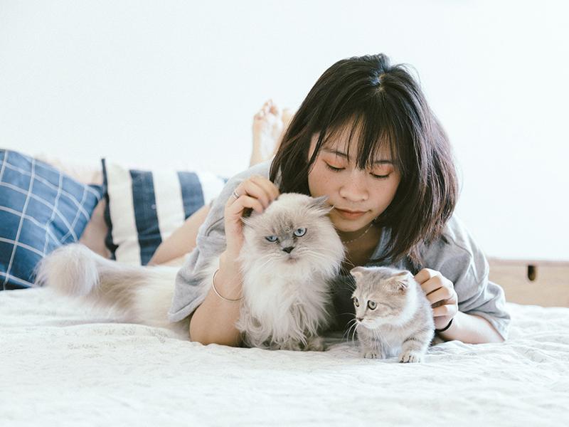 коты кошки домашние питомцы