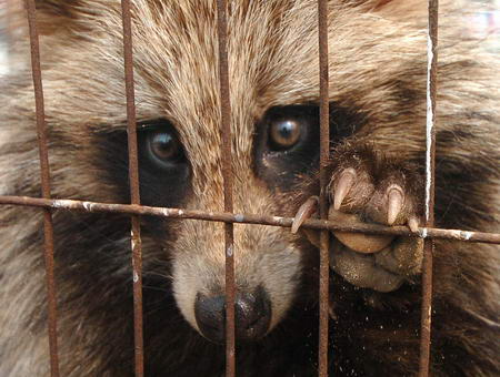 Animal Cruelty Animals Used For Clothing