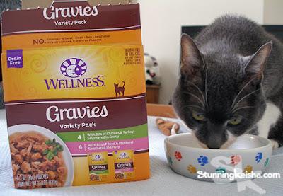 Can I Haz Gravy? #ChewyInfluencer