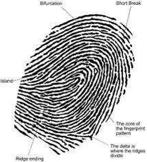 usjazahe 13 Jenis Sistem Identifikasi Yang Membedakan Antar Manusia
