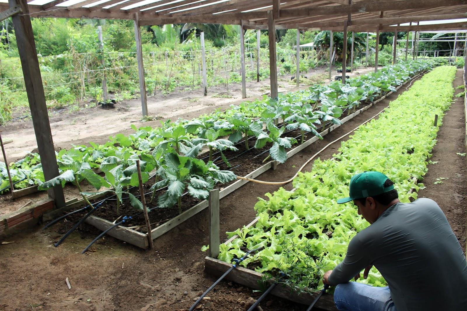 Projeto potencializa produção de hortaliças em Juruti com capacitação de 13 famílias