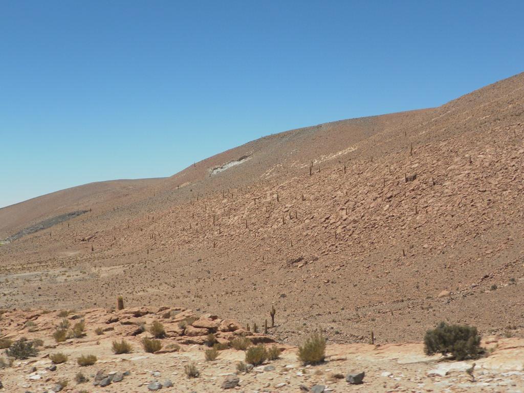 O que fazer em Atacama Trilha Cactus de Guatín