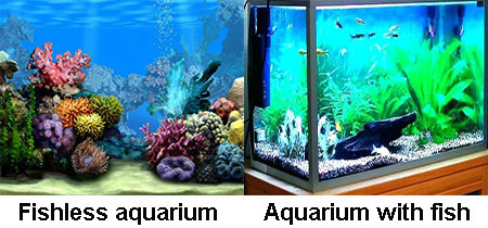 Nitrogen cycle in an aquarium with / without fish