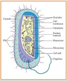 Ciri Ciri Bakteri