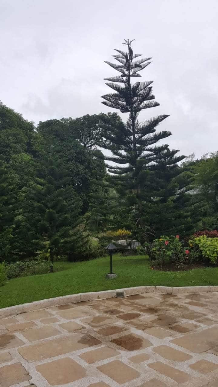 Greeneries at Tagaytay Highlands