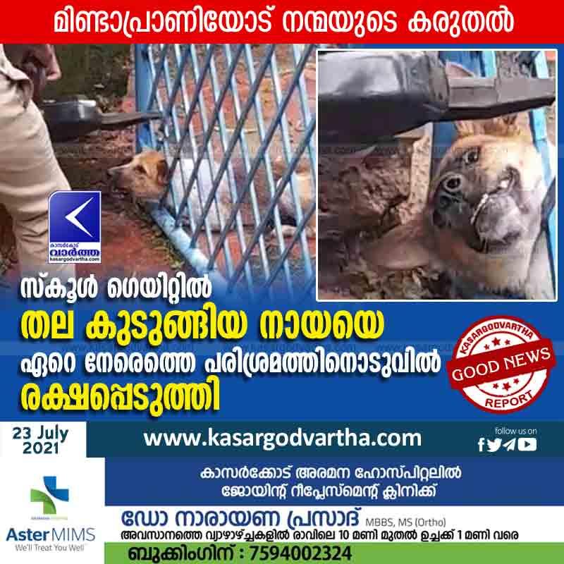 Kasaragod, News, Kerala, Kanhangad, Dog, School,  Rescued dog whose head was stuck at the school gate.