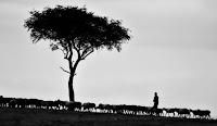 Shepherd - Photo by Pawan Sharma on Unsplash