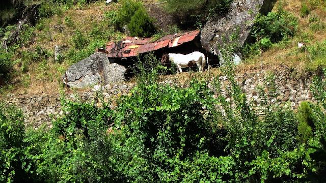 cavalo numa cabana de pedra