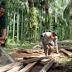 Pelaku pembalakan liar hutan di kabupaten agam ' makin meraja rela