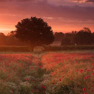 Fotos de paisajes de flores silvestres premiadas en IGPOTY 14