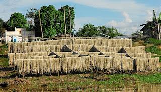 ECONOMIA_Workshop debaterá estratégias de produção de juta e malva no interior do Amazonas