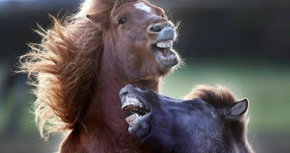 Horses Who Sing