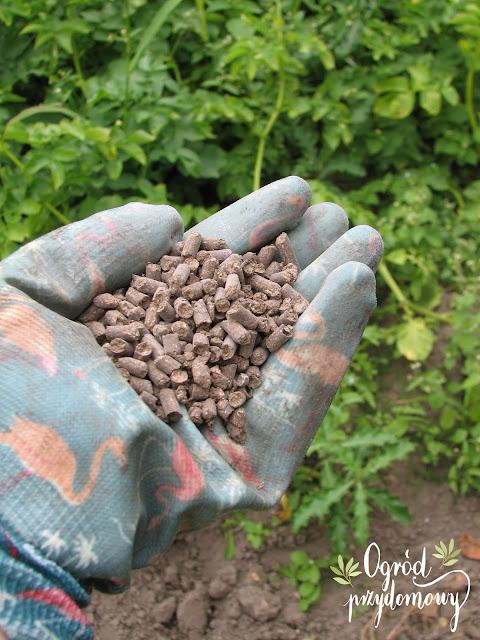 gleba w ogrodzie, ogród przydomowy