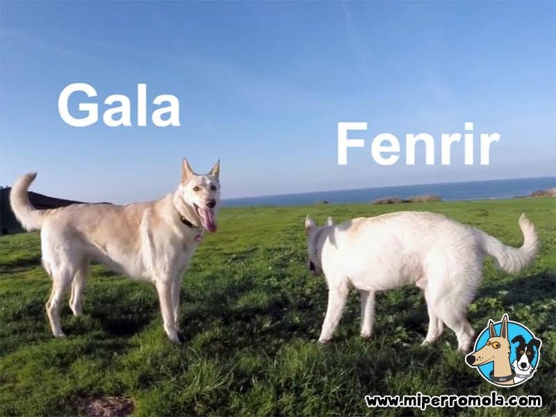 2 Cans de Palleiro en la Torre de Hércules
