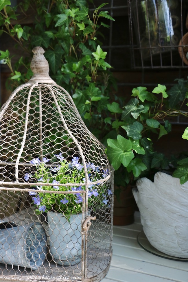 French Country Spring potting table with wire birdcage, blue lobelia bedding plant, vintage French zinc seed pots