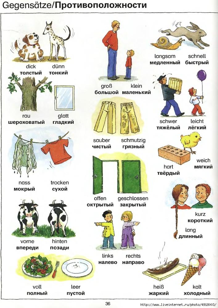 стало немецкий лексика в картинках избавиться родинок обусловлено